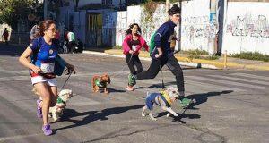 Hush Puppies presenta:III Caminata Familiar con Perros 5K